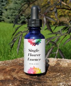 Single flower essence