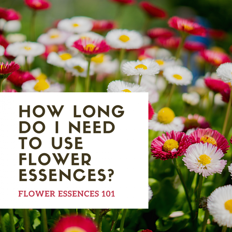How long do I need to use flower essences? Flower Essences 101