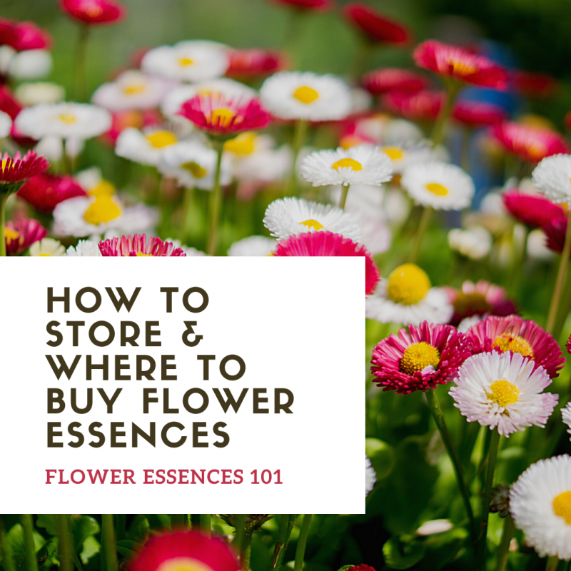 How should I buy and store my flower essences? Flower Essences 101