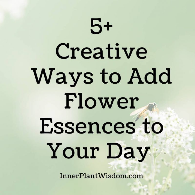 5 Creative Ways to Add Flower Essences to Your Day